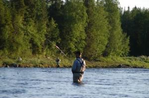 Laksefiske i Årgårdselva
