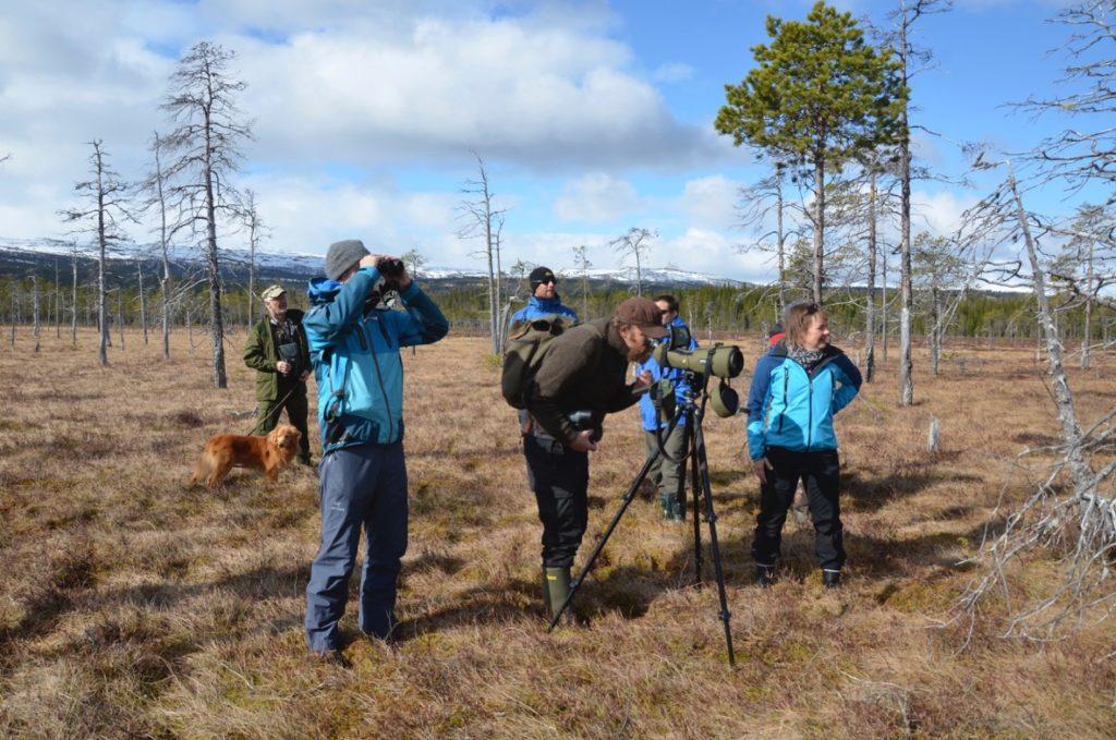 Ulendeltaet og Høylandet – fugletitting i verdensklasse