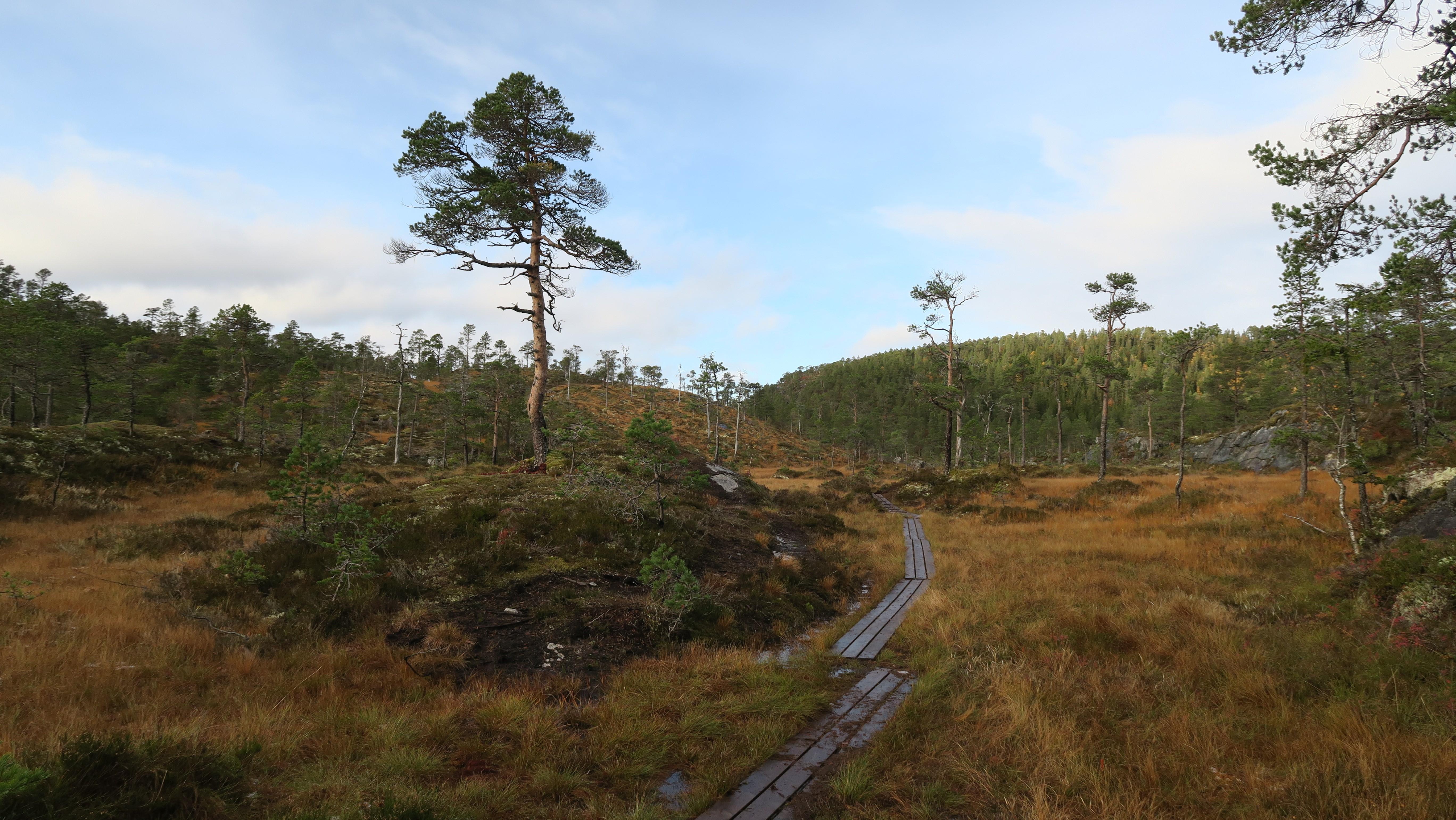 Klopper på tur til Spillumsaksla i Spillumsmarka, Namsos.