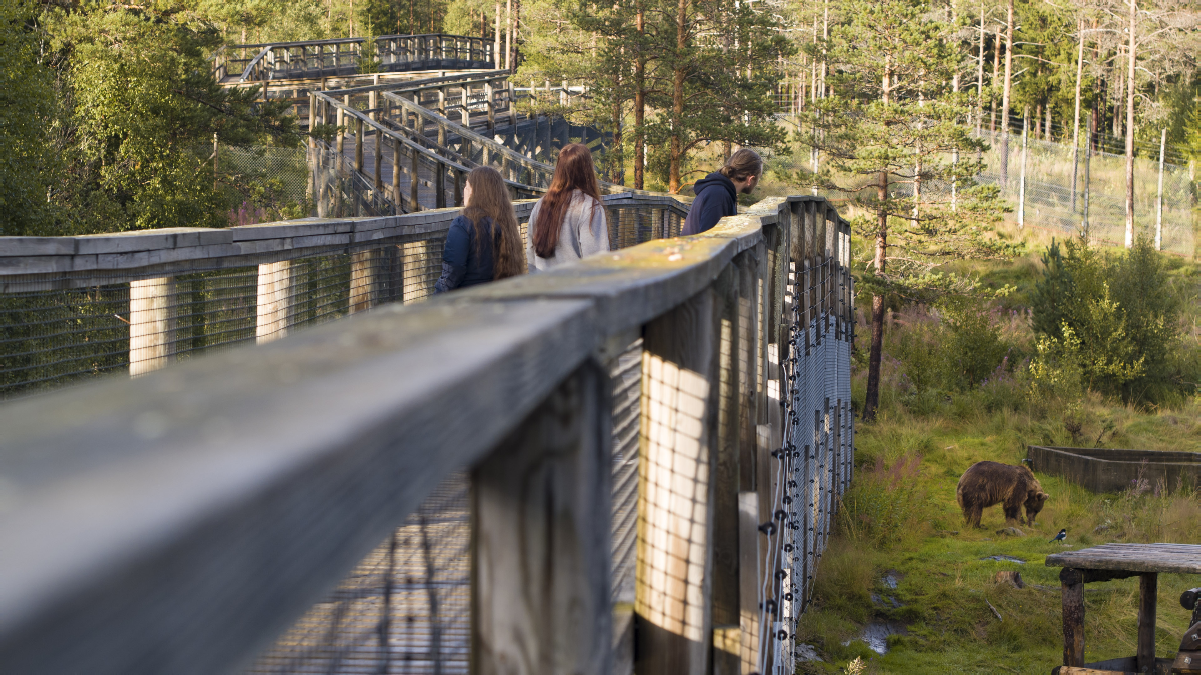 Namsskogan familiepark bjørn, ved E6 i Namdalen i Trøndelag. Foto: Grim Berge