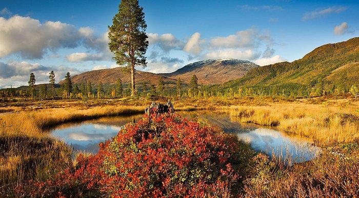 Heimdalshaugen i Grong i Namdalen, i høstvær. Foto: Steinar Johansen.